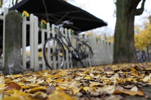 Outono na Holanda - ©Bailandesa