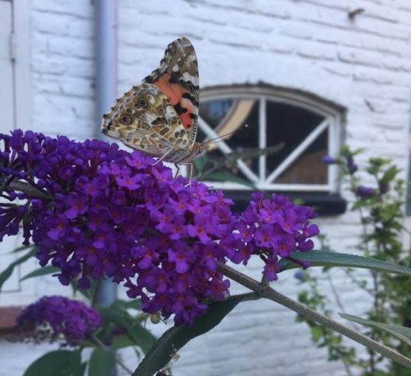 festival de borboletas tropicas utrecht