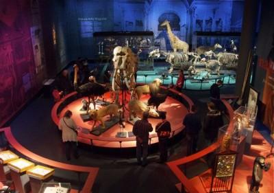 Museu Naturalis, Leiden - Holanda