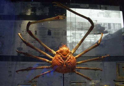 Museu Naturalis, Leiden- Holanda