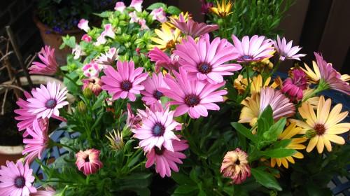 Flores na varanda - Holanda ©Bailandesa.nl - Vivendo na Holanda