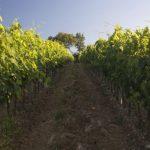 Estrada do Vinho - Toscana - Italia