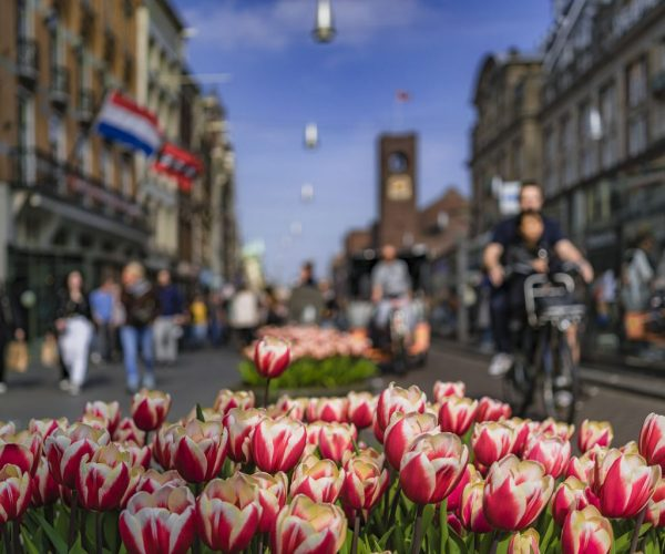 Festival de Tulipas Amsterdam