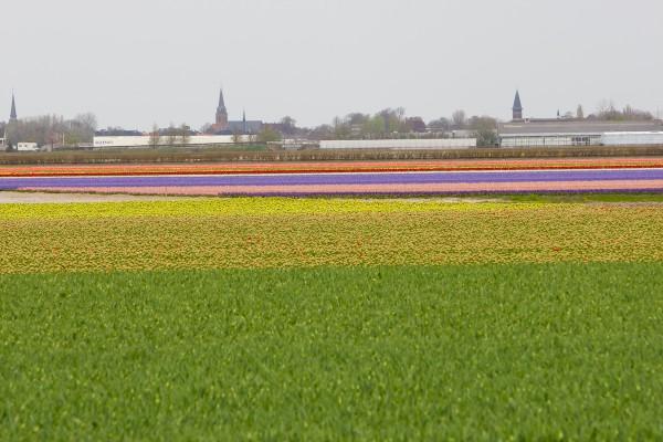 Keukenhof - Holanda - ©Bailandesa.nl - parque das tulipas na Holanda