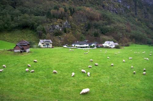 Noruega - Norway in a Nutshell - (c)Bailandesa.nl