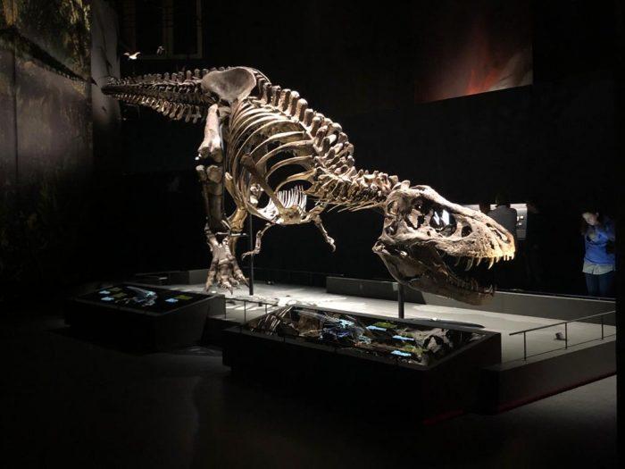 Museu Naturalis Holanda - Trex (c) bailandesa