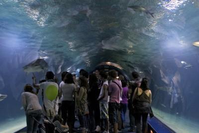 Oceanarium - Valencia _ Spain